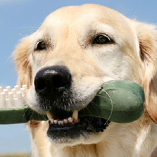 Pet Dental Care - Aztec Animal Clinic