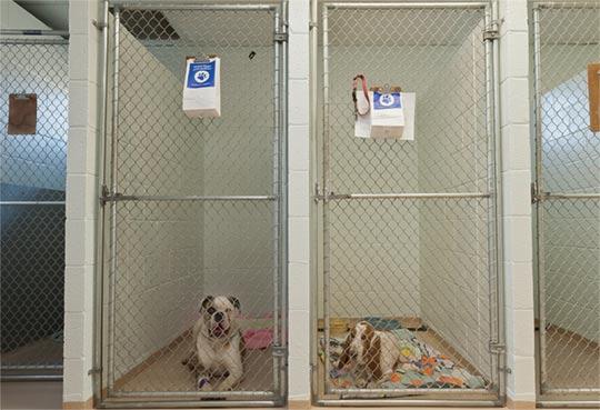 Dog-Kennels2