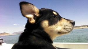 Travel-dog-300x168