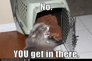 Is this you and your cat when it is time to go to the Vet's office??