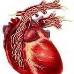 cartoon-heart-with-worms-150x150