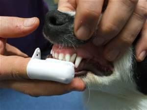 dog-brushing-teeth