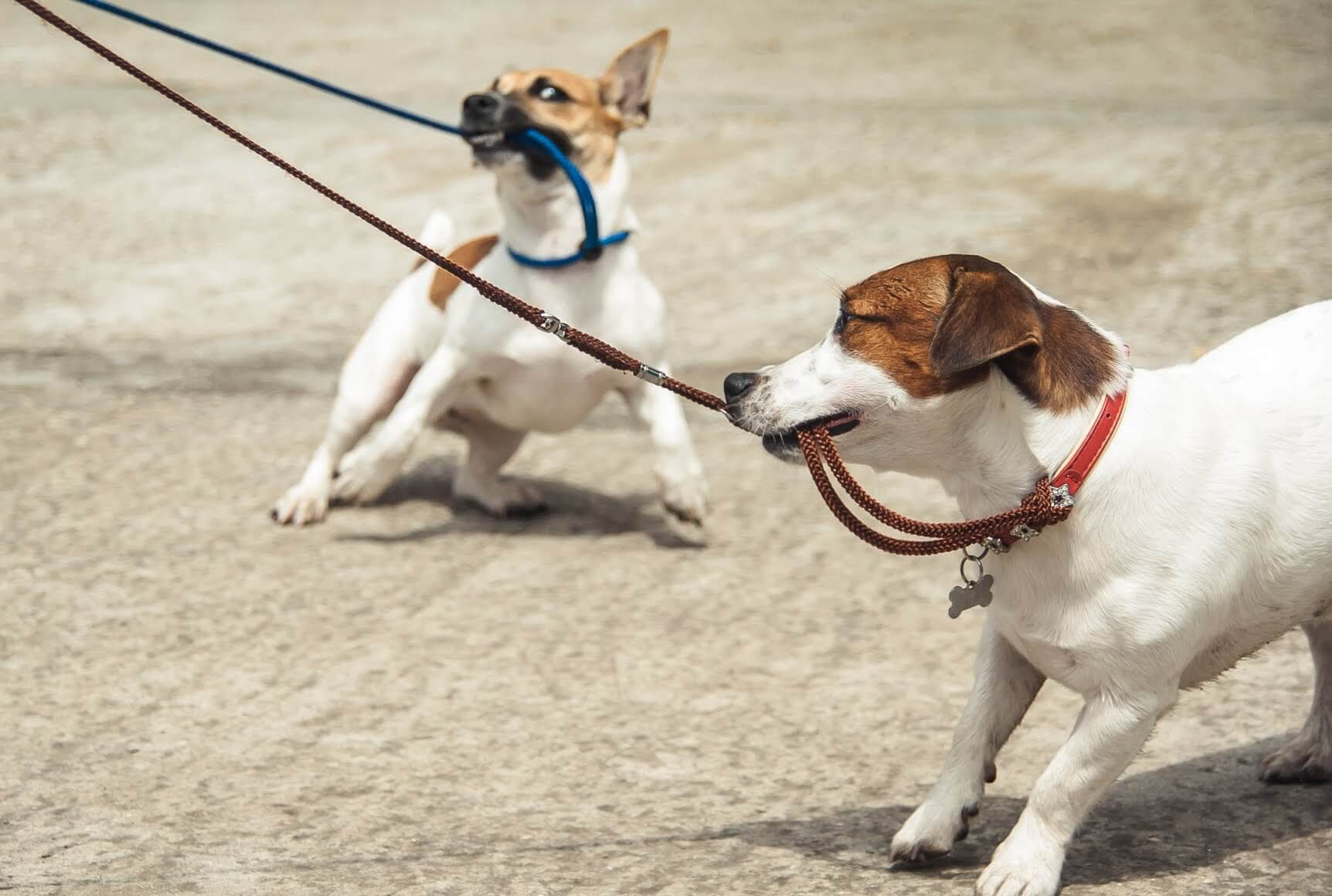 The key to changing excitable and disobedient dogs into calmer, better-behaved petsis to reinforce calm, settled behaviorrather than punishing what you don't want.