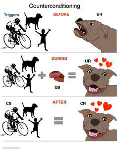 Counter-conditioning means changing the pet's emotional response, feelings or attitude towards a stimulus.