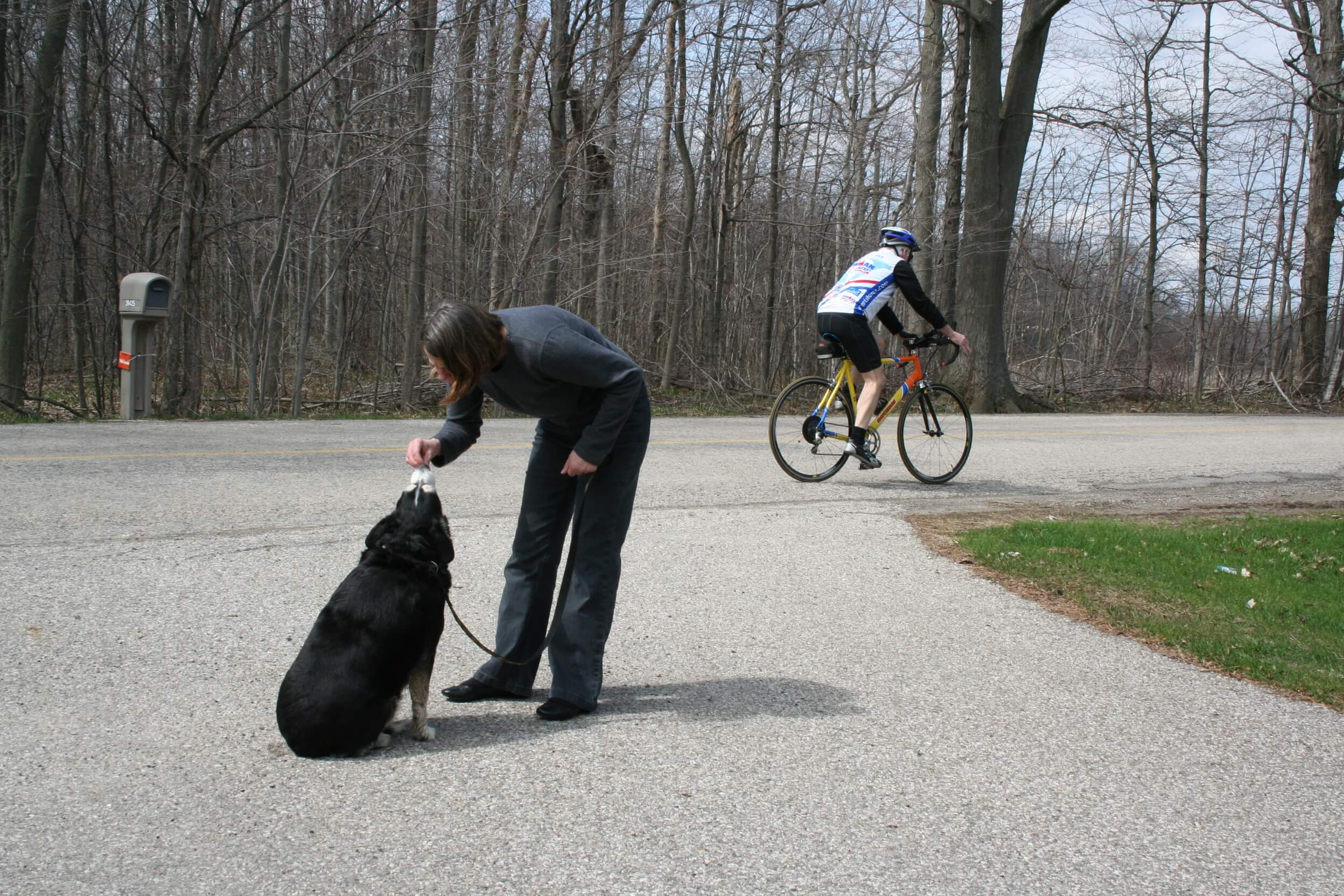 The settle command can be used to achieve a focused response when you dog is overly excited or anxious