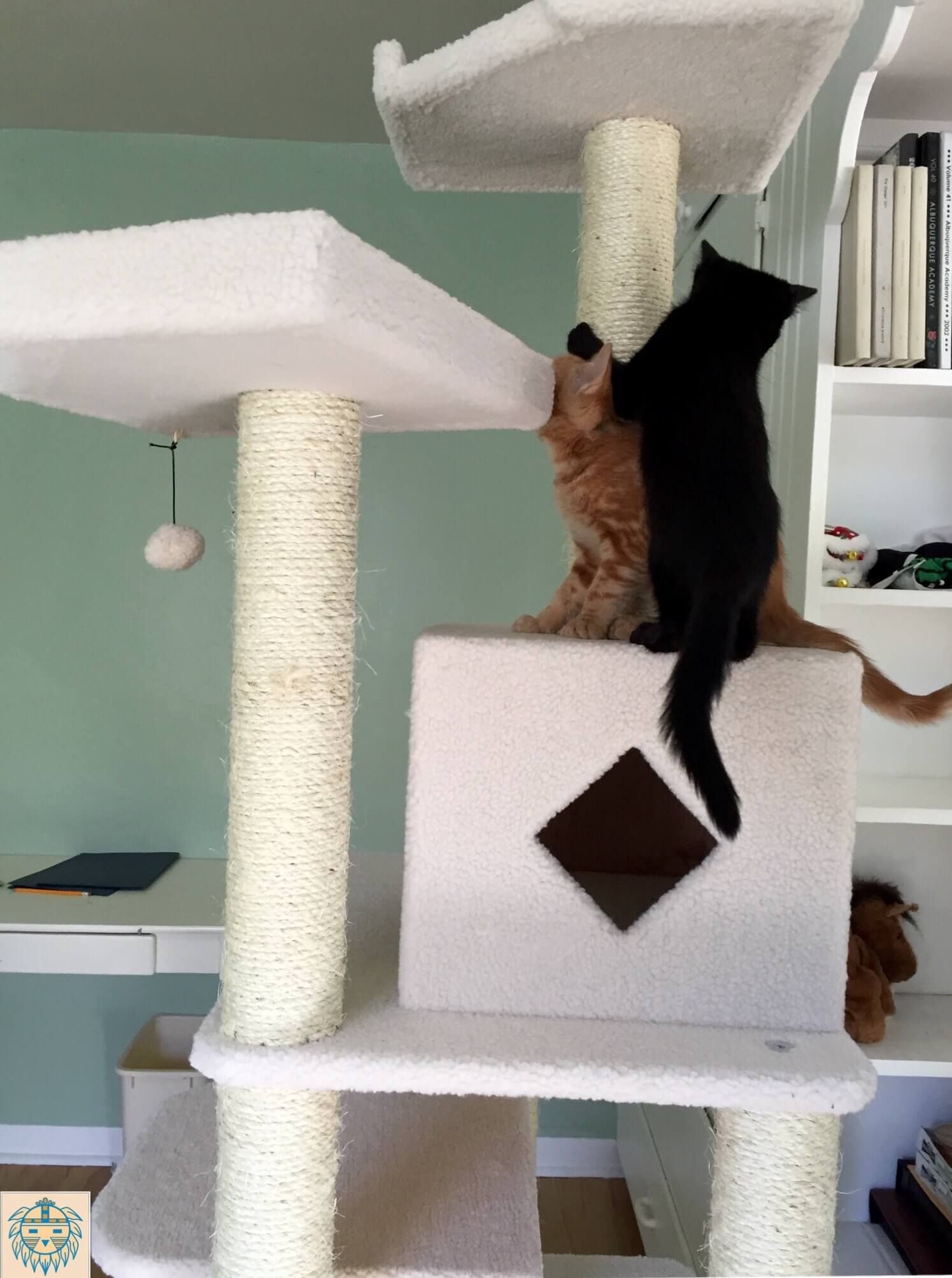 Dr. McGuire's cats Trey and Finn as kittens enjoying play time on their cat arobic center