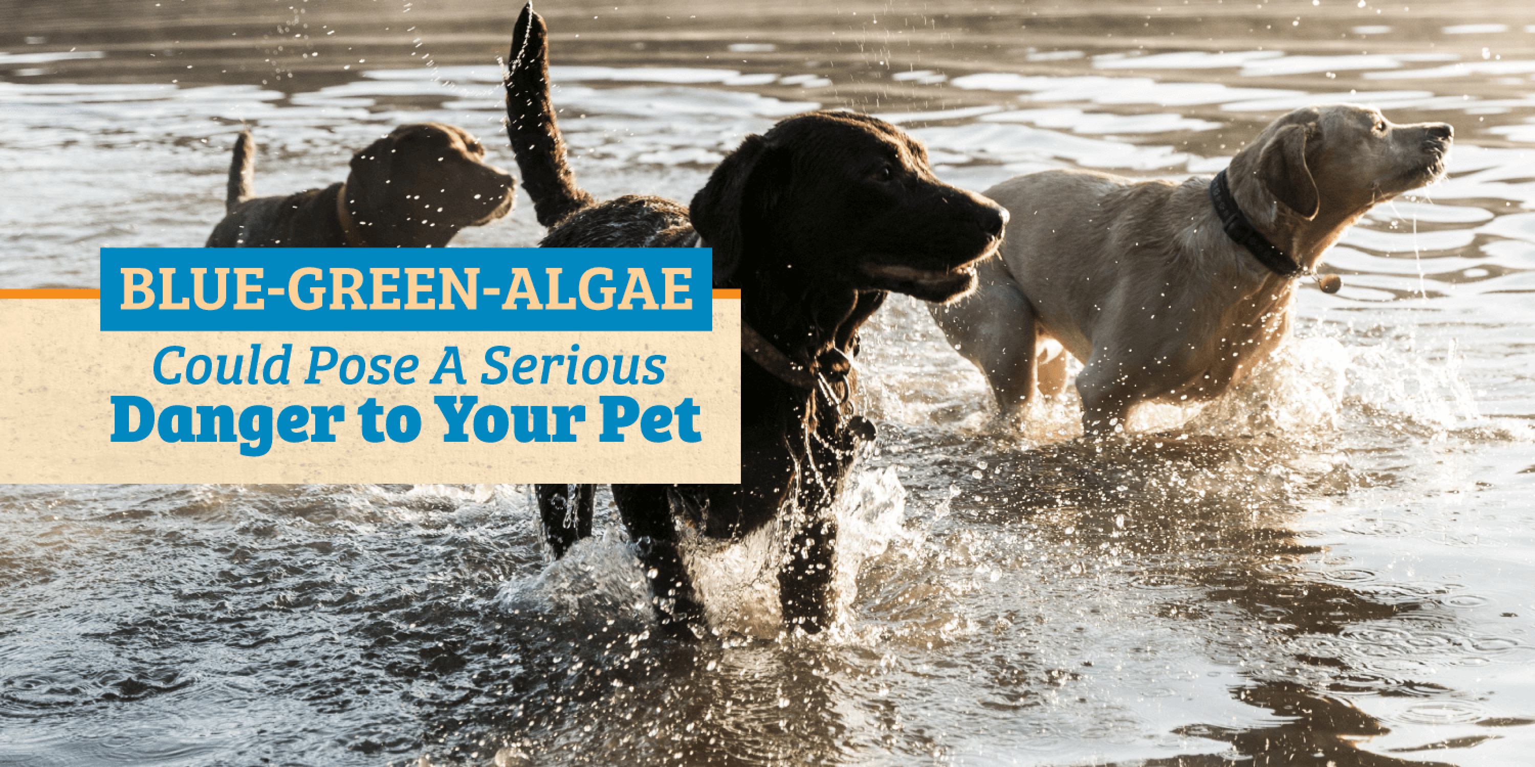 Blue-Green Algae Could Pose A Serious Danger to Your Pet